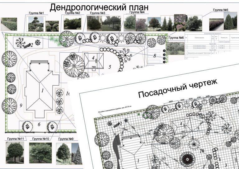 Дендроплан-план посадок деревьев и кустарников с наименованием, количеством и их местоположением.